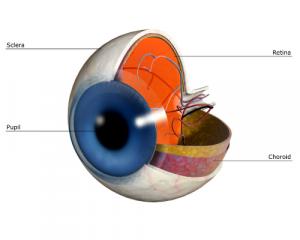 retina-300x240